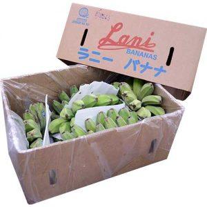 Lani Saging Saba 8kg-10kg