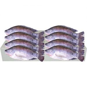 Cleaned Tilapia (M) 400-500g 1 case 8kg