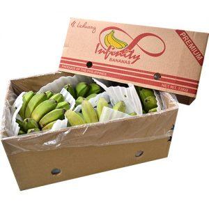 Infinity Premium Saging Saba (10-13kg)